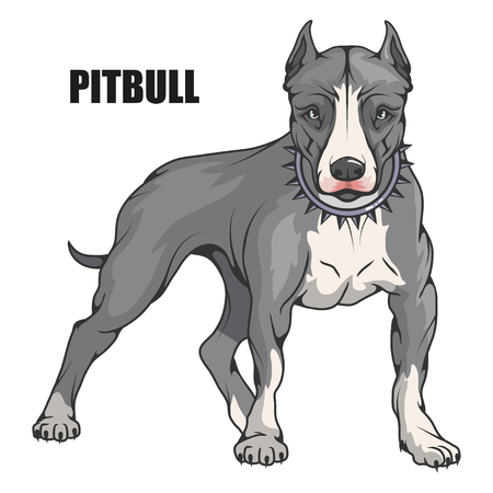 pit bull terrier, american pit bull, pet logo, dog pitbull, colored pets for design, color illustration suitable as logo or team mascot, dog illustration, vector graphics to design. Иллюстрация