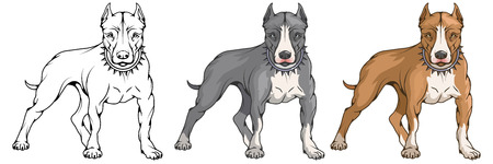 pit bull terrier, american pit bull, pet logo, dog pitbull, colored pets for design, color illustration suitable as logo or team mascot, dog illustration, vector graphics to design.