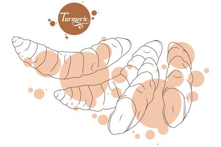 Hand gezeichnete Kurkuma Wurzel, würzige Zutat, Kurkuma Logo, gesunde Bio-Lebensmittel, Gewürz Kurkuma isoliert auf weißem Hintergrund, Küchenkraut, Etikett, Lebensmittel, natürliche gesunde Lebensmittel, Vektorgrafik zu entwerfen.