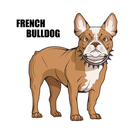 französische Bulldogge, Haustier-Logo, Hund französische Bulldogge, farbige Haustiere für Design, französische Bulldogge-Welpe, Farbabbildung geeignet als Logo oder Team-Maskottchen, Hundeabbildung, Vektorgrafiken zum Gestalten
