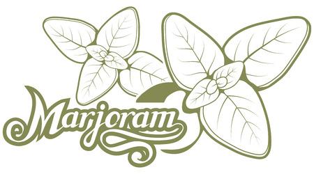 hand drawn marjoram leaves, spicy ingredient, marjoram logo, healthy organic food, spice marjoram on white background, culinary herbs, label, food, natural Ilustracja