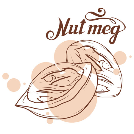hand drawn nutmeg powder, spicy ingredient, nutmeg logo, healthy organic food, spice nutmeg isolated on white background, culinary herbs, label, food, natural healthy food, vector graphic to design