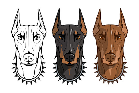 doberman pinscher, american doberman, pet logo, dog doberman, colored pets for design, colour illustration suitable as logo or team mascot, dog illustration, vector graphics to design Vettoriali