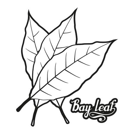 handgezeichnetes Lorbeerblatt, würzige Zutat, Lorbeerblatt-Logo, gesundes Bio-Lebensmittel, Gewürzlorbeerblatt isoliert auf weißem Hintergrund, Küchenkräuter, Etikett, Lebensmittel, natürliches gesundes Essen, Vektorgrafik zum Design Logo