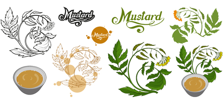 hand drawn mustard plant, spicy ingredient, mustard logo, healthy organic food, spice mustard isolated on white background, culinary herbs, label, food, natural healthy food, vector graphic to design Illustration