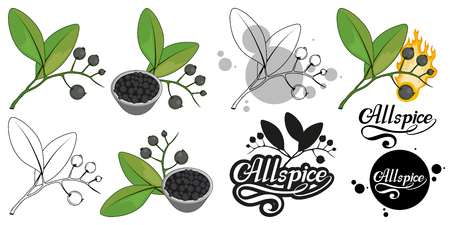 hand drawn allspice, spicy ingredient, allspice logo, healthy organic food, spice allspice isolated on white background, culinary herbs, label, food, natural healthy food, vector graphic to design