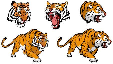 tygrys wektor zestaw do projektowania Ilustracje wektorowe