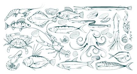 Ensemble de différents poissons de mer et mollusques. Fruits de mer aux épices. Poisson de mer frais avec des ingrédients. Fruits de mer de vecteur. Ensemble de poisson frais. Différents habitants de la mer. Graphiques vectoriels à concevoir