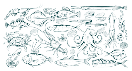 Set of different sea fish and mollusks. Seafood with spice. Fresh sea fish with ingredients. Vector seafood. Fresh fish set. Different sea inhabitants. Vector graphics to design Çizim