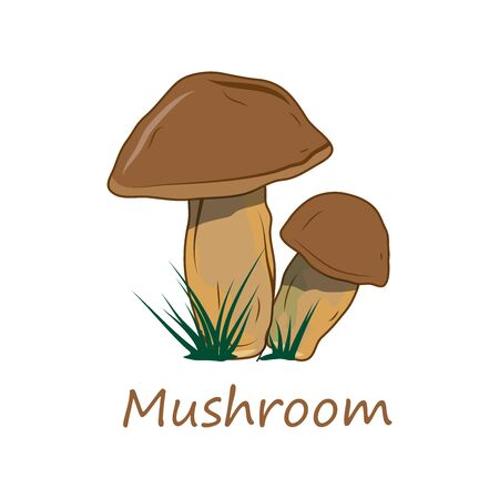 Mushrooms. Raw Mushrooms. Forest Food. Fresh Mushrooms for Raw Food Diet. Fresh Natural Vegan Product. Plant Food. Healthy Food. Vector graphics to design.