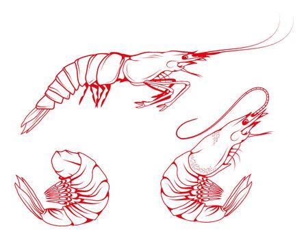 Hand Drawn Shrimp Set. Sea Food. Sea Fish. Shrimp.Tasty Seafood. Ocean Sport Fishing. Fresh Seafood Product. Delicious Baked Shrimp. Fish Meal Diet. Big Best Boiled Shrimp. Fishing. Vector graphics.  イラスト・ベクター素材