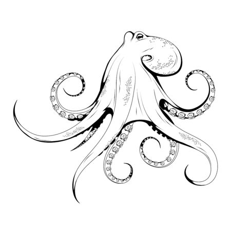 Hand Drawn Octopus. Sea Food. Octopus. Sea Fish.Tasty Seafood. Ocean Sport Fishing. Fresh Seafood Product. Delicious Octopus. Fish Meal Diet. Big Best Octopus. Fishing. Vector graphics to design.  イラスト・ベクター素材