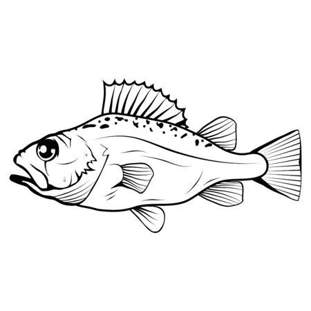 Hand Drawn Bass Fish. Sea Food. Bass Fish. Sea Inhabitants.Tasty Seafood. Ocean Sport Fishing. Fresh Seafood Product. Delicious Bass Fish. Diet. Big Best Bass Fish. Fishing. Vector graphics to design.  イラスト・ベクター素材