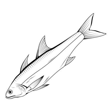Hand Drawn Haddock . Sea Food. Haddock. Sea Fish.Tasty Seafood. Ocean Sport Fishing. Fresh Seafood Product. Delicious Haddock. Fish Meal Diet. Big Best Haddock. Fishing. Vector graphics to design.