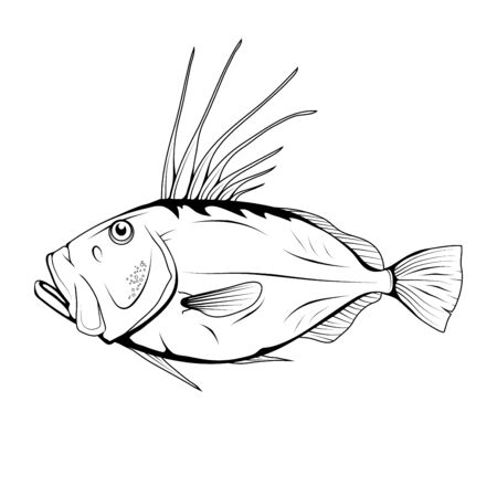 John Dory (Zeus faber). Sea Food. Zeus Faber. Sea Fish.Tasty Seafood. Ocean Sport Fishing. Fresh Seafood Product. Delicious John Dory. Fish Meal Diet. Zeus faber. Fishing. Vector graphics to design.