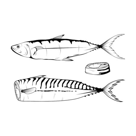 Hand Drawn Atlantic Mackerel. Sea Food. Mackerel. Sea Fish.Tasty Seafood. Ocean Sport Fishing. Seafood Product. Delicious Mackerel. Fish Diet. Big Best Mackerel. Fishing. Vector graphics to design.