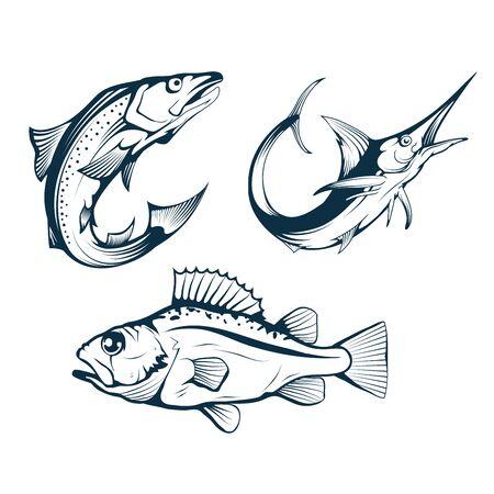 Salmon. Sea Perch and Marlin. Symbols of Fishery Sport. Seafood Symbols. Salmon, Sea Bass and Marlin for Fishing Design. Fishing Logo. Sea Fish. Vector graphics to design. 일러스트