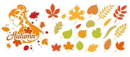 Autumn logo vector. The natural label. Autumn colorful bright leaves. Decorative set of isolated colorful autumn leaves. Vector graphics to design. 일러스트