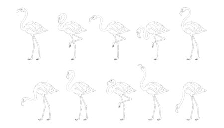 Set of pink flamingos. Cute flamingos colored collection. Flamingo animal exotic, nature wild fauna. Exotic tropical bird. Zoo animal. Exotic flamingo bird in different poses. Vector graphics