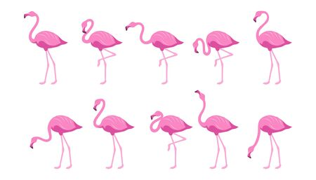 Flamingo Exotic tropical bird. Set of flamingos. Exotic animals. Cute pink flamingos collection in different poses. Nature, wild fauna. Zoo animal. Exotic bird in different poses. Vector graphics