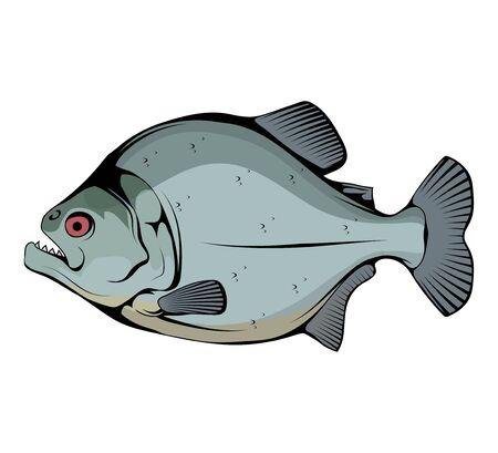 Piranha. Fish piranha mascot . Hunter predatory fish. Piranha fish . Living in rivers and fresh waters. Powerful jaws. The fish is also known as caribe.