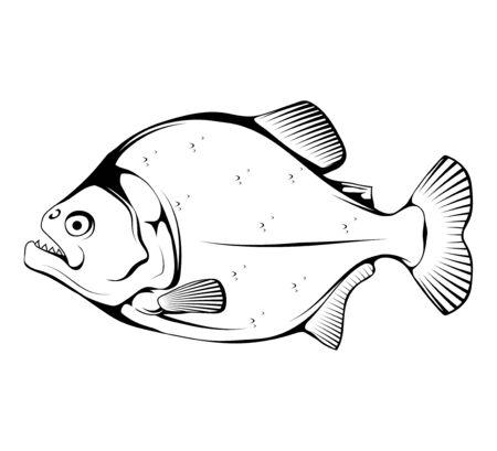 Sketch Piranha. Fish piranha mascot . Hunter predatory fish. Piranha fish . Living in rivers and fresh waters. Powerful jaws. The fish is also known as caribe.