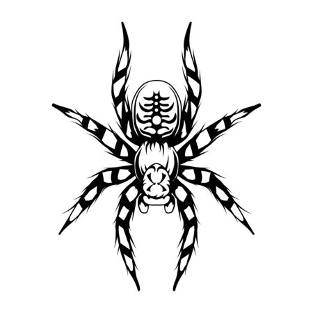 Tarantula. Tarantulas, Animalia, Arthropoda, Chelicerata, Arachnida, Araneae, Mygalomorphae vector. Tarantula spider tattoo. Exotic pets. Halloween. Spider or arachnid species. Dangerous insects.