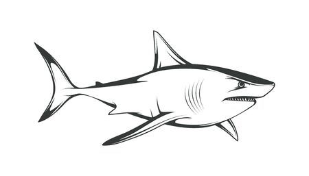 White shark. Saltwater fish. Eater Shark. Carcharodon. Big aggressive shark. Fish a shark a side view sketch. The emblem with shark for a sport team. Angry shark vector illustration.
