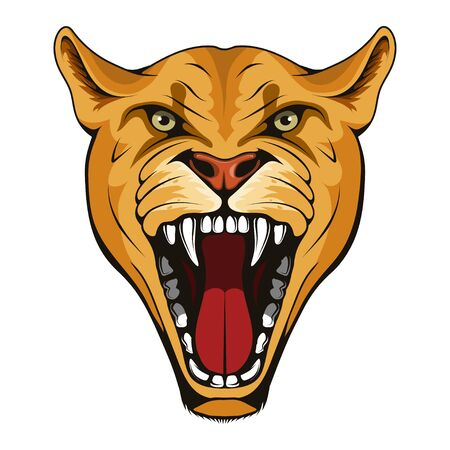 Puma, lynx, lioness. Panther with angry face expression. Puma head mascot logo. lioness Mascot Color Logo. lynx Tattoo. Angry animal sports mascot. Wild cats. Logo animal for tattoo or T-shirt print