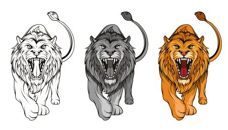 Set of angry, roar lion. Stands King lion. Predator animal. Lion mascot color  .