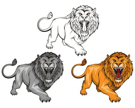 Set of angry, roar lion. Stands King lion. Predator animal. Vettoriali