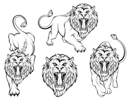 Set of angry, roar lion. Lion king stands in different poses. Predator animal. Lion color . Animal tattoo. Animal sports mascot. Wild big cat.