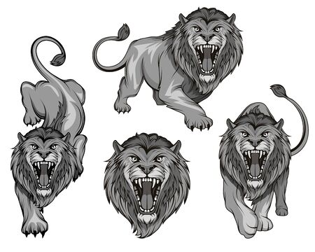 Set of angry, roar lion. Predator animal. Lion king color  . Animal tattoo. Lion stands in different poses. Animal for sports mascot. Ilustracja