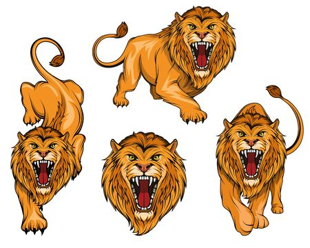 Lion set. Angry, roar lion. Predator animal. Tameless color . Lion stands in different poses. Animal for sports mascot.