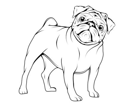 Adorable Pug puppies. Humor poster, t-shirt composition, hand drawn style print. Cute dog of pug breed. Portrait of the dog. Cute friendly fat chubby fawn sitting pug puppy. Dogs, pets, animal. Zdjęcie Seryjne - 146747896