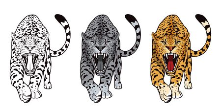 Set of angry, leopard. Stands leopard. Predator animal. Leopard mascot color  .