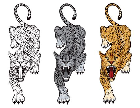 Set of angry, leopard. Stands leopard. Predator animal. Leopard mascot color . Animal tattoo. Zdjęcie Seryjne - 149048334
