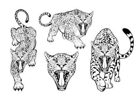 Leopard sketch in various poses