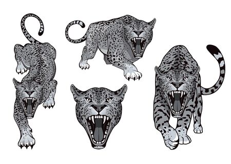 Set of angry, leopard. Predator animal. Leopard color . Animal tattoo. Leopard stands in different poses. Vettoriali