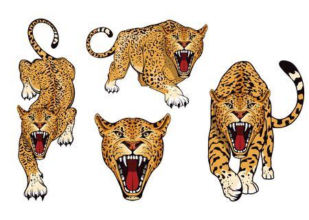 Leopard  set. Angry, leopard. Predator animal. Tameless color  . Leopard stands in different poses.