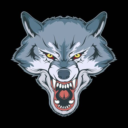 Vector illustration of a wolf. Angry animal for tattoo or t-shirt print. Predator illustration for a sport team. Vector character.   Wolf on black background.