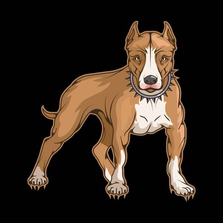 Illustration of a pit bull. Dog for tattoo or t-shirt print. American Pit Bull Terrier illustration for a sport team. Vector character.   Pit bull on black background