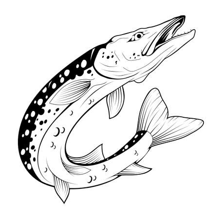 Pike Image. Northern pike. Fish monster. Sketch for mascot, logo or symbol. Pike fishing. Sport fishing club. Vector graphics to design