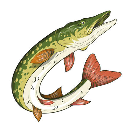 Pike Image. Northern pike. Fish monster. Sketch for mascot, logo or symbol. Pike fishing. Sport fishing club. Vector graphics to design 写真素材 - 162535367