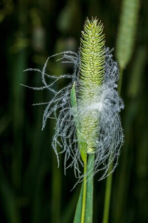 weightlessness: Easy feather on a blade of grass