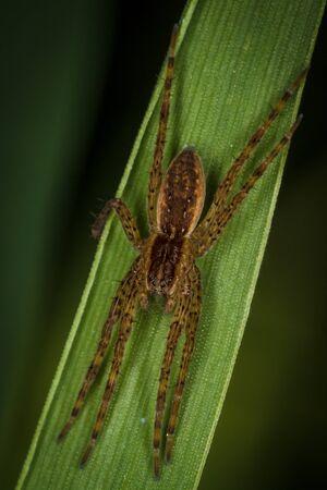 arachnids: Spider on the green grass