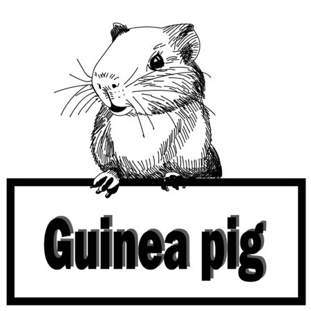 Hand-drawn black-white illustration of guinea pig with any text plate on the white blackground