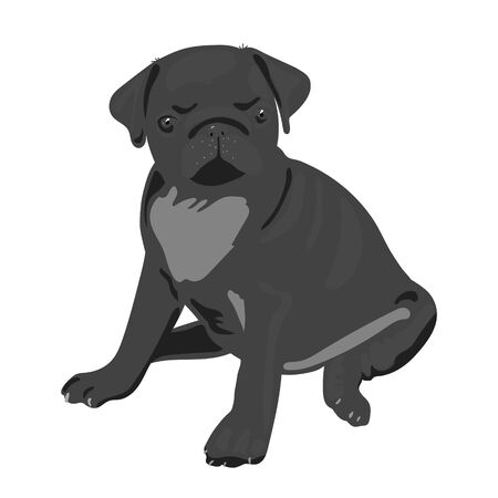 Realistic vector illustration of sitting pug dog. Art in grayscale isolated on white background. For veterinary clinics, pet products, dog handlers. Can be used as mascot