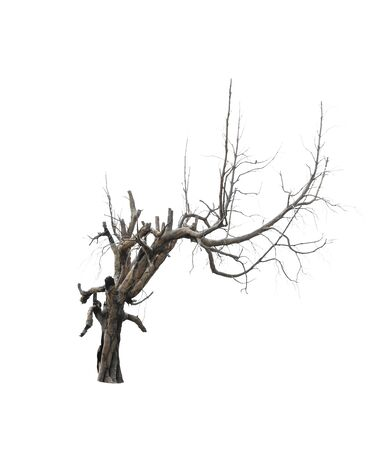 bole: Dead tree isolated on white background