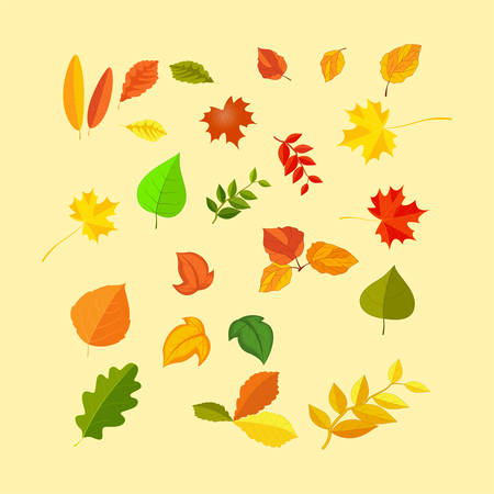 chokeberry: autumn leaves set, isolated on white background. simple cartoon flat style